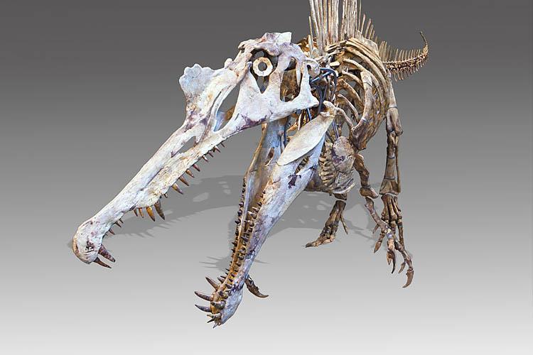 Dragon or Spinosaurus