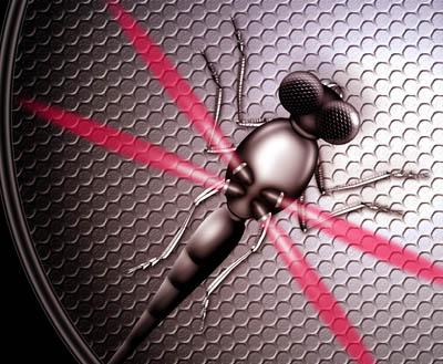 Spy Fly Dragonfly