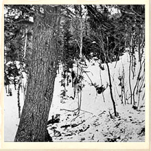 Dyatlov Pass - The Pine Tree