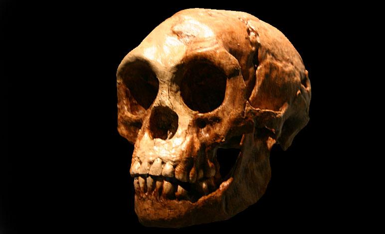 strange-skulls-floresiensis